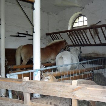 Blick in den Stall